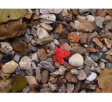 Tiny red leaf Photographic Print