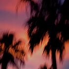 Palms by DuranBlakeley