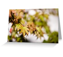 Acer Leaves 3 Greeting Card