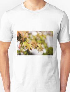 Acer Leaves 3 T-Shirt