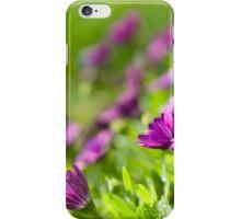 Purple Osteospermum iPhone Case/Skin