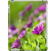 Purple Osteospermum iPad Case/Skin