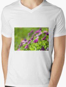 Purple Osteospermum Mens V-Neck T-Shirt