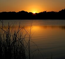 Tropical Belize Sunset at Lamanai Lagoon Paradise River by HotHibiscus