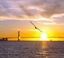 Golden Gate - Seagull by Paul Gilbert
