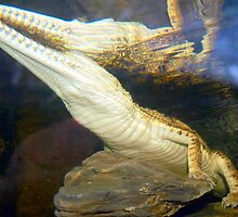 Reptilian Reflection by Clive