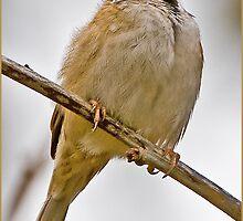 Proud Tree Sparrow on a grey Day by Lars Klottrup