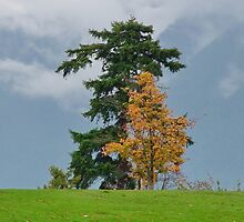 Tree's in Stanley Park by AnnDixon