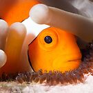 Nemo with eggs by James Deverich