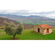Olive Tree and Old Hut in Tuscany  Photographic Print