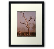 Misty Dawn In the Yards at Oakdale Queensland © Vicki Ferrari Photography Framed Print