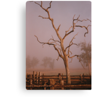 Misty Dawn In the Yards at Oakdale Queensland © Vicki Ferrari Photography Canvas Print