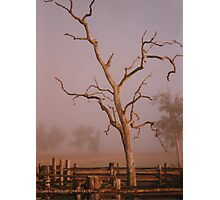 Misty Dawn In the Yards at Oakdale Queensland © Vicki Ferrari Photography Photographic Print
