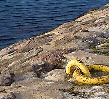 Yellow by Lars Clausen