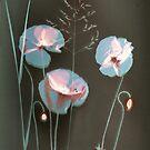 Sunprint of wild Poppies by Paul Woloschuk