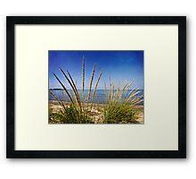 Sheldon Marsh Coastal Plants Framed Print