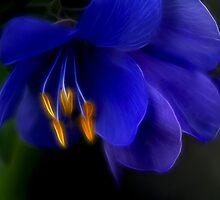 Passionate Blue by Deborah  Benoit