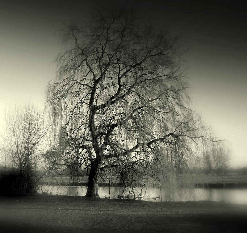 Weeping Willow Tree Black And White Tattoo Tree Weeping Wi...