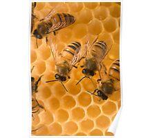 Plan Bee Poster