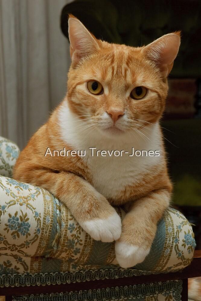 Angus by Andrew Trevor-Jones