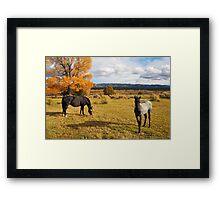 Fall Horses Framed Print