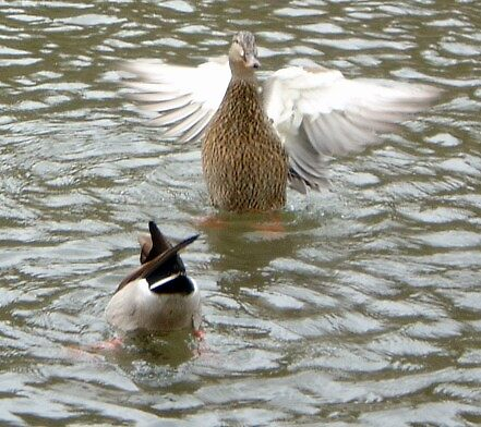 One Duck Down by WaleskaL
