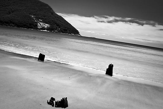 Sealer's Cove by Arek Rainczuk