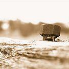 Old fence Bolt by Tammy Serdiuk