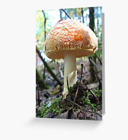 Fat Cap Mushroom Greeting Card