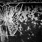 Frosted cobweb by Victoria Kidgell