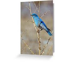 Blue in spring Greeting Card
