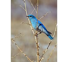 Blue in spring Photographic Print