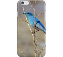 Blue in spring iPhone Case/Skin