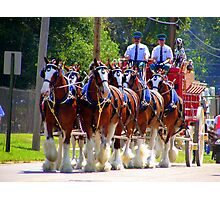 Budweiser Crew & Clydesdale Horses Photographic Print