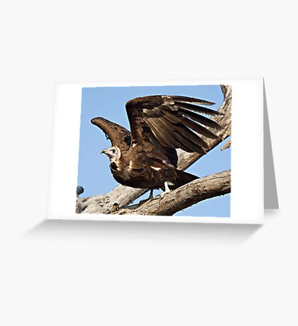 Hooded Vulture Greeting Card