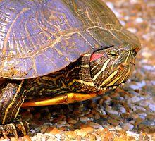 Turtle Love by bubbledrew