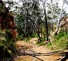Golden Gully, Hill End, NSW by Evita
