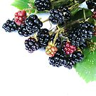 Berry fine... by Yool