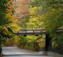 Bridge through the Trees by enchantedImages