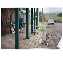 Watch Dog Poster