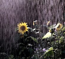 Sunflower Sunshower by Wayne King