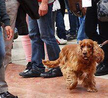 Dog on crowded street by alpacat