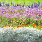 River of Flowers by kenspics