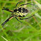 Web Walking by Anne Smyth
