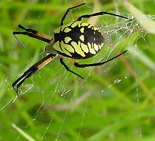 Web Walking by Anne Smyth