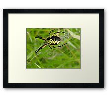 Web Walking Framed Print