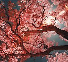 Red Sakura by anwarsalim
