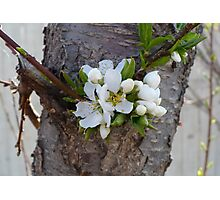 Spring's  Promise Photographic Print