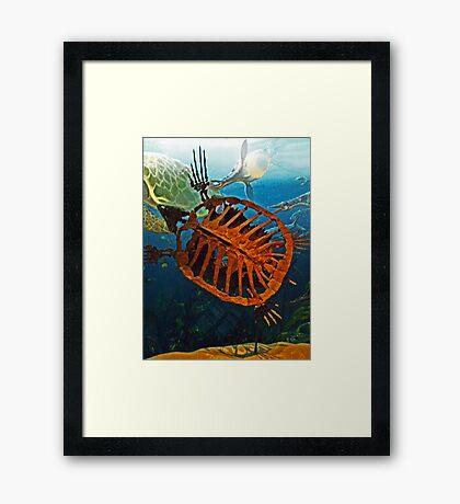 Ancient Turtle  Framed Print