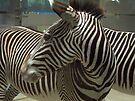 Zebras by Tamara Valjean